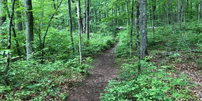 Harris Brook Trail